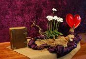 2016 Tweede Lijdenszondag: Jezus is liefde. Liefde is......... Met hem op weg gaan die ons zegt lief te hebben. Zo het verschil te maken. God open ons hart. De 10 gerbera's staan voor de 10 geboden die Mozes schreef zijn gezicht straalde. Terwijl Jezus aan het bidden was, begon zijn gezicht te glanzen. Zijn kleren werden verblindend wit, de witte bloemen. Mozes die de wet vertegenwoordigde. Elia die de profeten vertegenwoordigde. En Jezus die zowel de wet als de profeten zou vervullen. In de schikking zien we hoe een bloem boven de ander uitsteekt- dezelfde en toch anders - sterk en kwetsbaar. Wie zichzelf verhoogd zal vernederd worden maar wie zichzelf vernederd zal verhoogd worden. Liefde is ….. nooit zonder Hem. N.a.v. Lukas 9 en 18 en Exodus 34.