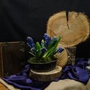 Eerste Lijdenszondag 2017: We gebruiken een schijf van een boomstam als klok waarin we de jaarringen zien. Zij verraden de tijd die verstreken is, en verbeelden het thema : precies op tijd. Paars is de kleur van inkeer en past bij de 40 dagen tijd. Het mos staat voor stilte en de jute drukt de eenvoud uit in het stuk. Het oliekruikje als symbool voor de nardus-olie die, uit liefde en eerbewijs, over Jezus uitgegoten wordt. Een schaal hyacinten voor de heerlijke geur die de olie had. Goede geuren zijn in de bijbel een verwijzing naar de ongrijpbare Eeuwige: aanwezig, maar niet te pakken. n.a.v. Marcus 14.